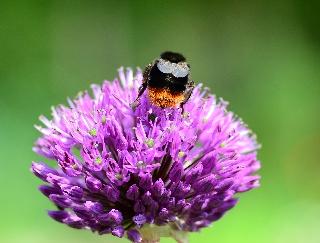 Wildbienen überwintern